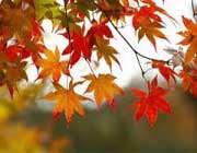 برگ های رنگارنگ در پاییز
