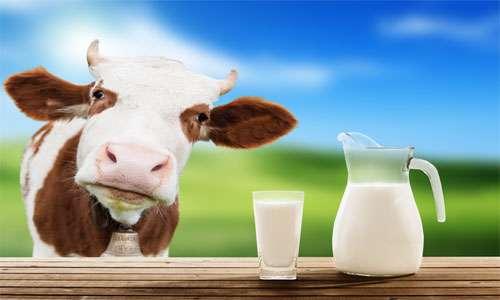 طب سنتی؛ شیر را اینگونه بنوشید