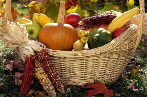 تغذیه ی پاییزی