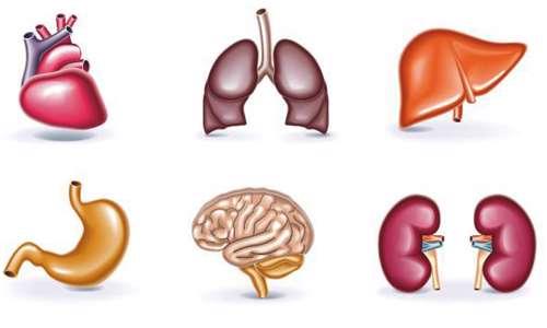 اندام های بدن
