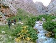 vaashi river