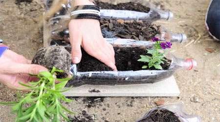 اهمیت پوشش گیاهی در فرسایش خاک
