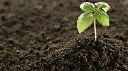 خاک، عامل رشد گیاه