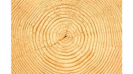 حلقه هاي درخت از چه درست مي شود؟