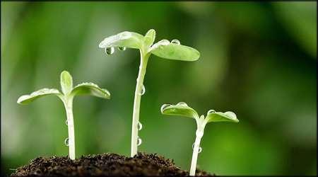 هومون های موثر در گیاهان