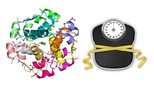 9 هورمون کنترل کننده وزن و مدیریت آن ها (1)