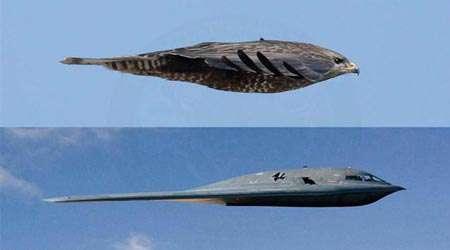 هواپیما و پرندگان
