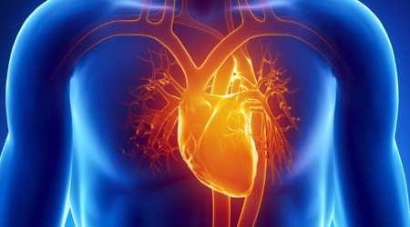 بیماری قلبی، قلب