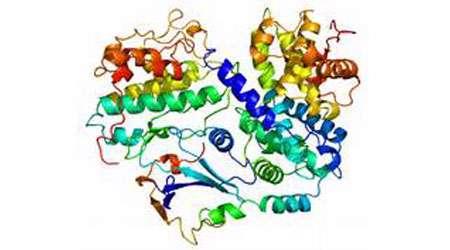 حیاتی ترین نگهبان بدن خود را بهتر بشناسیم p53 شماره 2