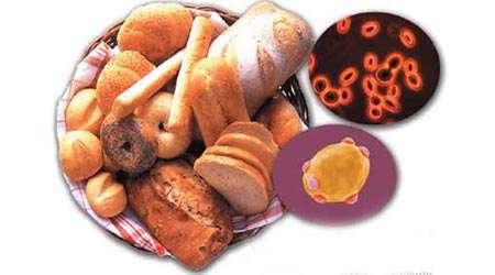 مخمرها، میکرو ارگانیسم های زنده
