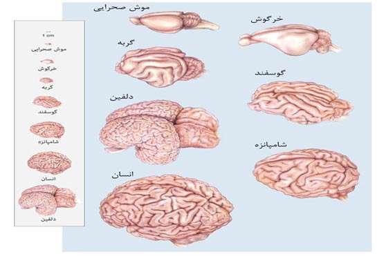 کنترل ذهني اشيا دستاورد برتر دوره اول مينو