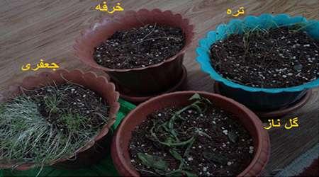 بررسی آلودگی هوای تهران بر میزان تخریب dna گیاهان مختلف
