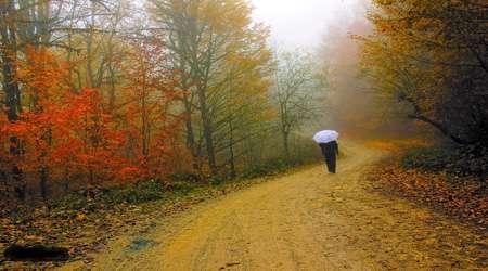 پاییز ، تنهایی