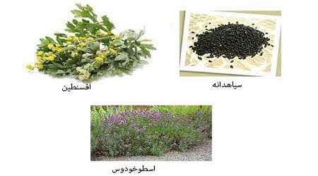 گیاهان موثر بر دوری حشرات دستاورد برتر دوره اول اسلام