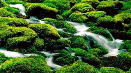 yeşil renkle tedavi
