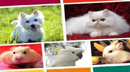 بررسی نگهداری از حیوانات خانگی دستاورد تقدیری دوره دوم زهره