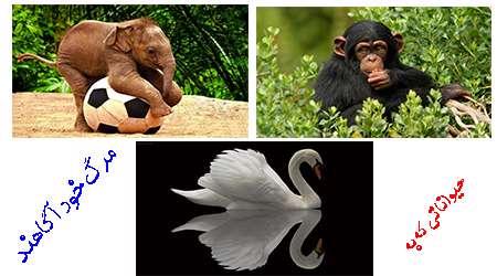 حیواناتی که به زمان مرگ خود آگاهند.