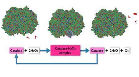 مشاهده فعاليت آنزيم كاتالاز در گياهان مختلف، جلسه اول