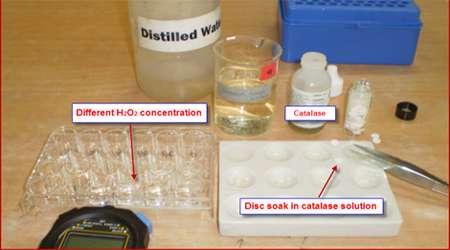 مشاهده فعاليت آنزيم كاتالاز در گياهان مختلف، جلسه دوم