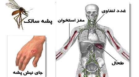 زخم هايي که زود خوب نمي شوند