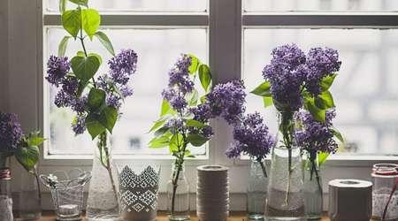 گل و گياه داخل خانه