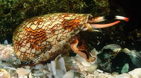 سمی ترین جانداران جهان- بخش دوم