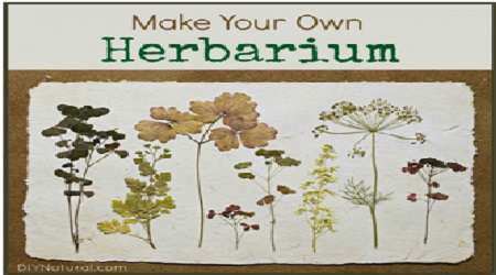درست کردن هرباریوم