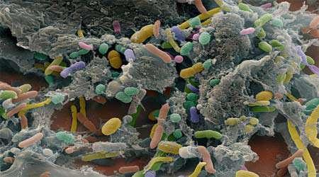 یافتن تنوع اكولوژیكی میكروب ها، جلسه ششم