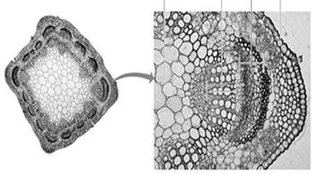 مشاهده میكروسكوپی سلول های گیاهی و جانوری، جلسه دوم