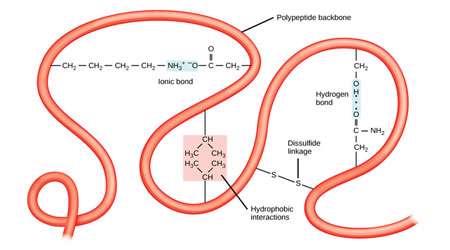 تا شدن پروتئین ها (1)