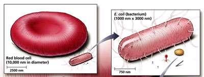 اندازه سلول (1)
