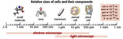 اندازه سلول (2)