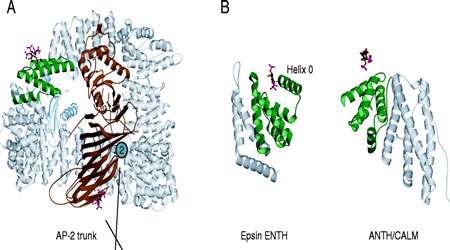 ساختار و عمل پروتئین ها (2)