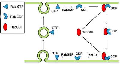 پروتئین های غشایی (2)