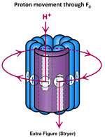 پمپ پروتونی (بخش اول)