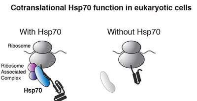 ورود پروتئین به میتوکندری (1)