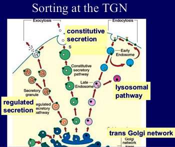 پروتئین های بین غشا (1)