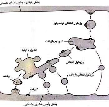 پروتئین های بین غشا (2)