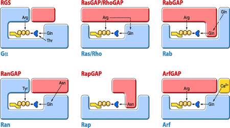ورود پروتئین ها به هسته (2)