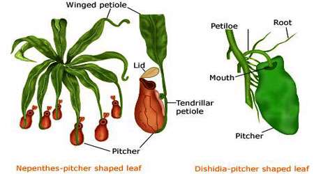 بررسی انواع گیاهان (2)