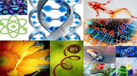 تمام آنچه لازم است برای یک پژوهش زیست شناسی خوب بدانیم...، جلسه ششم