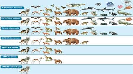 تمام آنچه لازم است برای یک پژوهش زیست شناسی خوب بدانیم...، جلسه چهارم