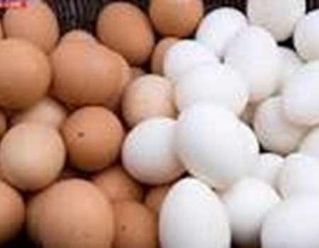 تحذير: لا لتخزين البيض بباب الثلاجة