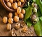 خواص گردو از منظر طب سنتی