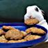 نوزاد خرگوش