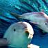 نوزاد دلفين