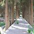 باغ فين کاشان