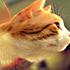 شوخی با حیوانات (2)