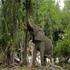 بزرگترین حیوان خشکی