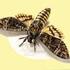تصاویری از حشرات